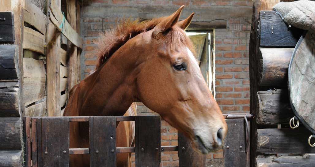 Caballo Campana - one of the many beautiful horses
