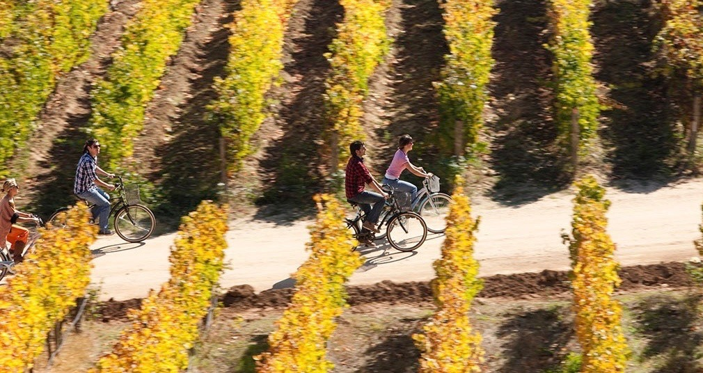 Cycling through the Wine Valleys
