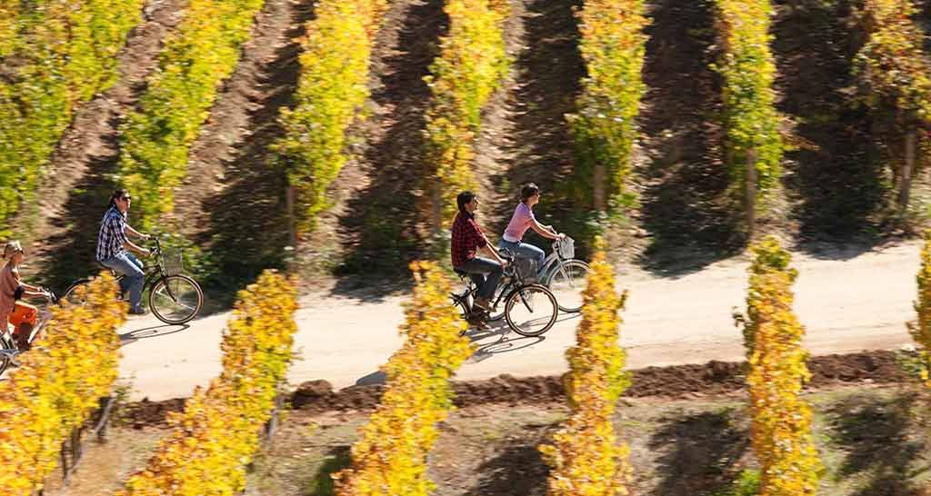 Cycling among vineyards at Lapostolle