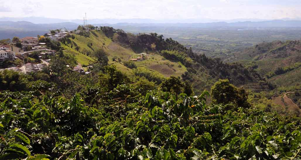 Typical scenery from a coffee plantation