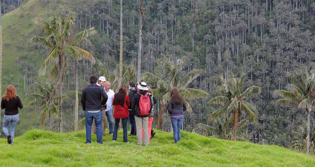 Admiring a high altitude wax palm 'forest'