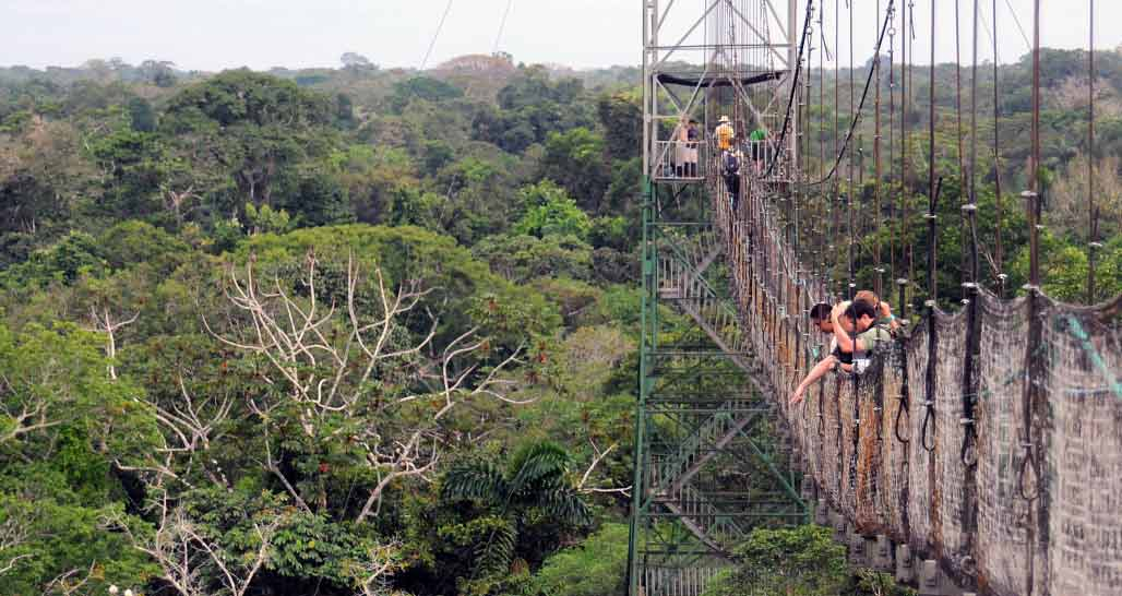 Canopy walk suspension bridge, Sacha Lodge, Napo