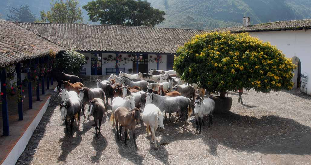 Horses In The Patio -  Hacienda Zuleta.