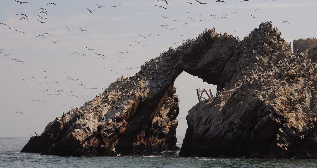Birds, birds, birds... The Ballestas Islands, Paracas, Peru