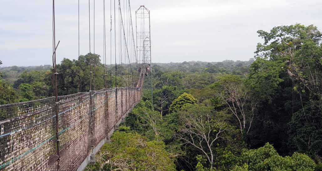 Sacha Lodge - canopy walk suspension bridge