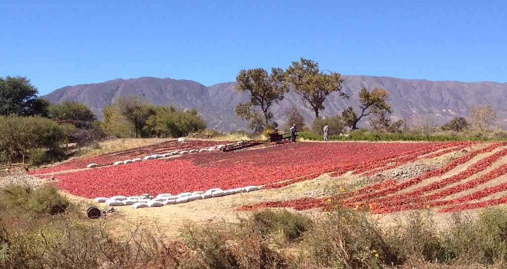 Red peppers drying in the sun, Northwest Argentina