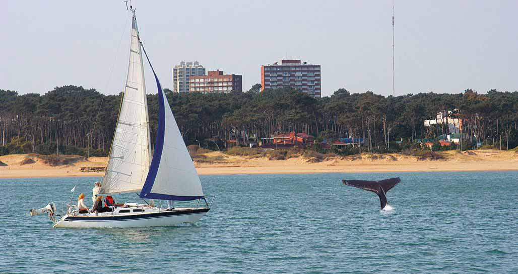 Sailing and whale watching, Punta del Este
