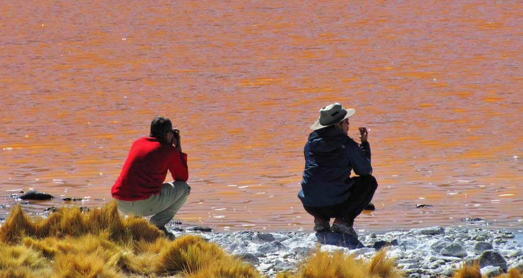 Flamingos in the Laguna Colorada (Red Lagoon)